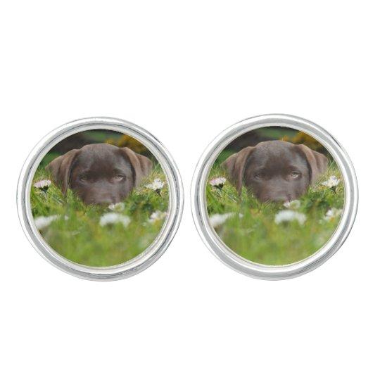 Chocolate Lab Puppy Cufflinks