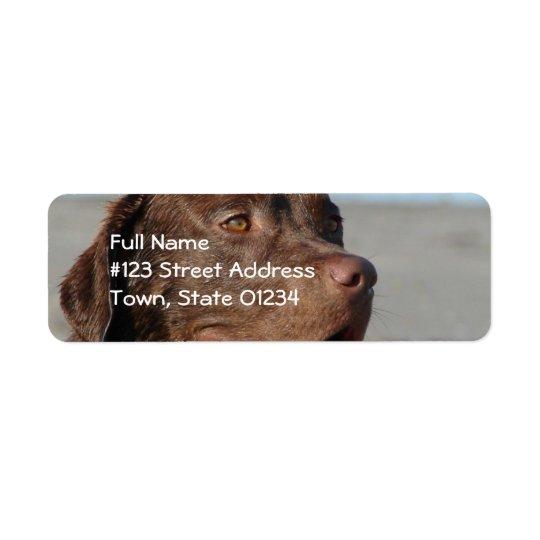 Chocolate Lab Return Address Mailing Label Return Address Label