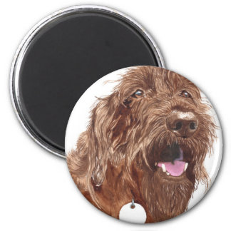 Chocolate Labradoodle #1 Magnet