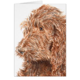 Chocolate Labradoodle #2 Notecard