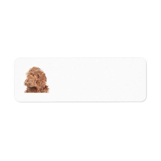 Chocolate Labradoodle Return Address Label