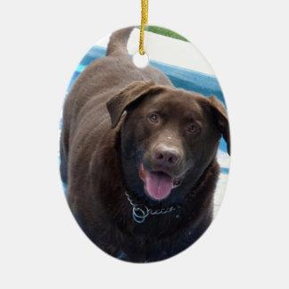 Chocolate Labrador having fun in a swimming pool Ceramic Ornament
