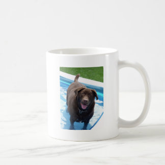 Chocolate Labrador having fun in a swimming pool Coffee Mug
