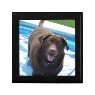 Chocolate Labrador having fun in a swimming pool Gift Box