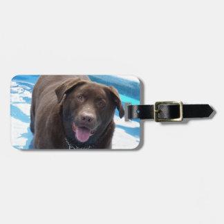 Chocolate Labrador having fun in a swimming pool Luggage Tag