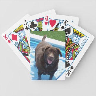 Chocolate Labrador having fun in a swimming pool Poker Deck