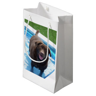 Chocolate Labrador having fun in a swimming pool Small Gift Bag