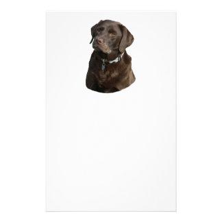 Chocolate Labrador photo portrait Custom Flyer