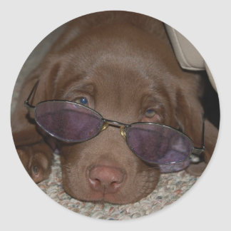 Chocolate Labrador Puppy Sticker