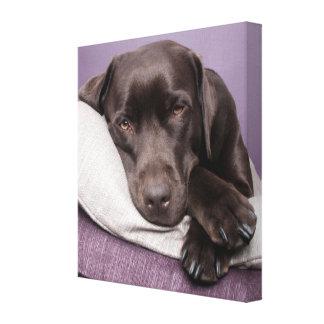 Chocolate labrador retriever dog canvas print
