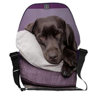 Chocolate labrador retriever dog sleepy on pillows commuter bags