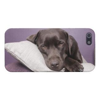 Chocolate labrador retriever dog sleepy on pillows iPhone 5/5S cover