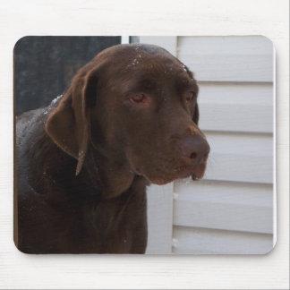 Chocolate Labrador Retriever Mouse Pad