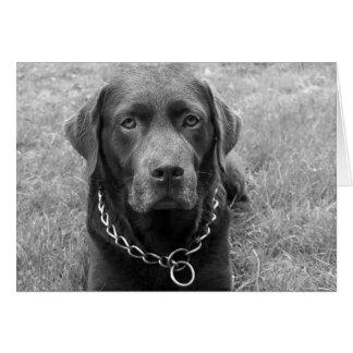 Chocolate Labrador Retriever Puppy Dog Note Card