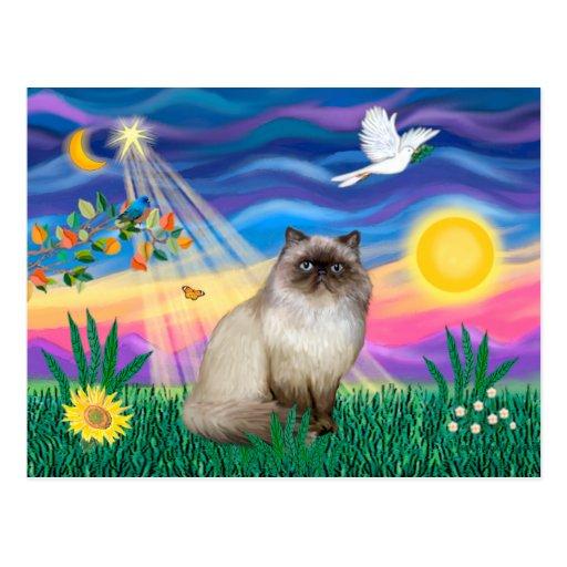Chocolate Point Himalayan Cat  - Twilight Post Card