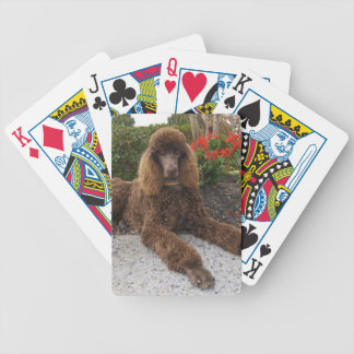 Chocolate Standard Poodle Dog Playing Cards