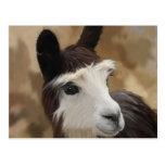 Chocolate & white Alpaca Postcard
