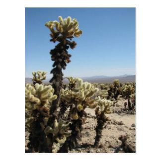 Cholla Garden -Joshua Tree Postcard