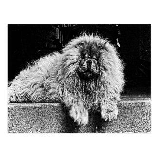 Chow Chow Dog on Porch, Black and White Postcard