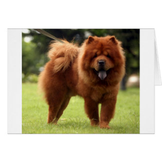 Chow Chow Dog Poses Card
