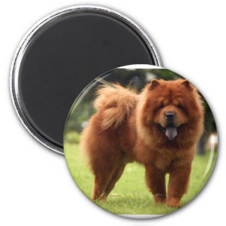 Chow Chow Dog Poses Magnet