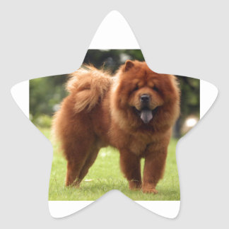 Chow Chow Dog Poses Star Sticker