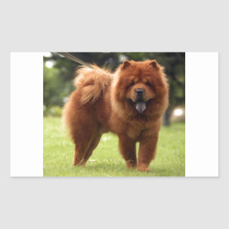 Chow Chow Dog Poses Sticker