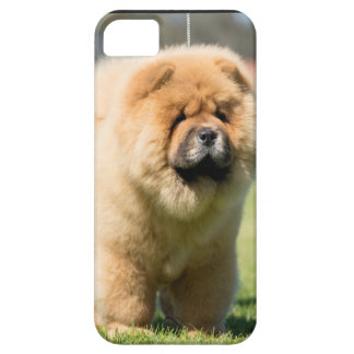 Chow chow iPhone 5 cases
