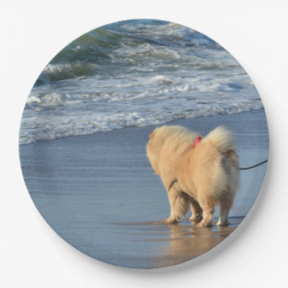 chow chow on beach paper plate