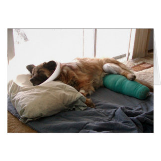 Chow Mix 'Get Well Soon' Greeting Card