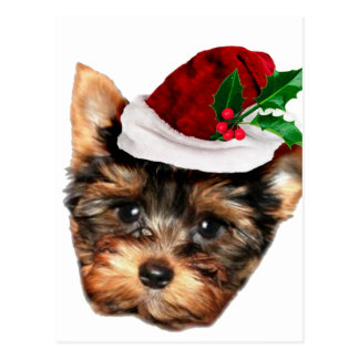 Chrismtas Yorkshire Terrier puppy dog Postcard