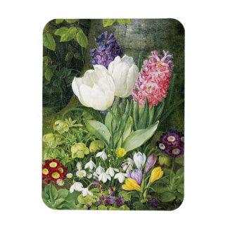 Christine Løvmand A Still Life with Tulips, Сrocus Magnet