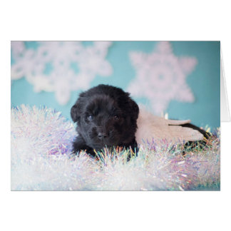 Christmas Angel Puppy Card