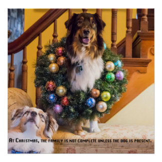 Christmas Aussies Poster