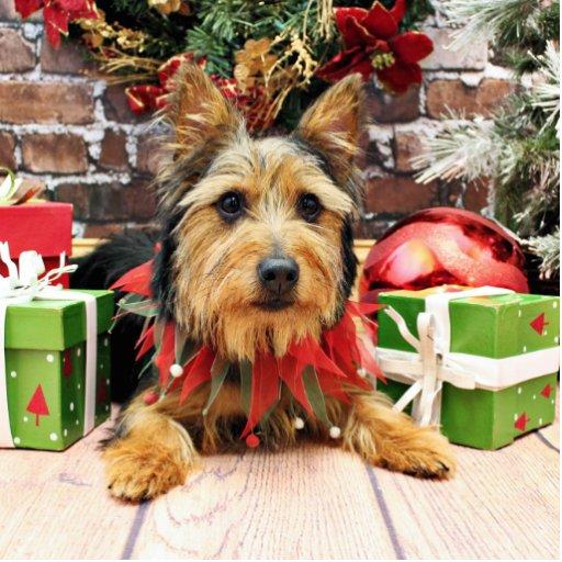 Christmas - Australian Terrier - Leo Photo Sculptures