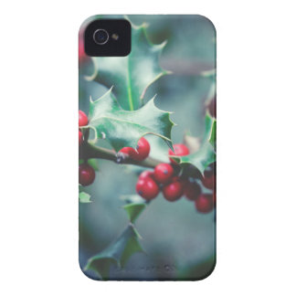 Christmas berries Case-Mate iPhone 4 cases