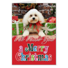 Christmas - Bichon Frise - Harry Card