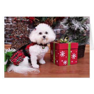 Christmas - Bichon Frise - Mia Card