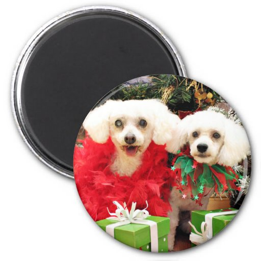 Christmas - Bichon Frise - Satchel and P.J. Magnets
