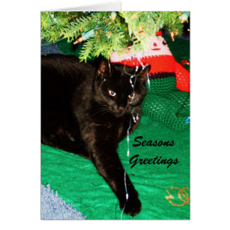 CHRISTMAS BLACK CAT card