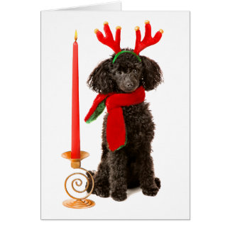 Christmas Black Toy Poodle Dog Dressed as Reindeer Card