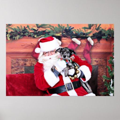 Christmas - Blue Heeler - B'Elana Posters