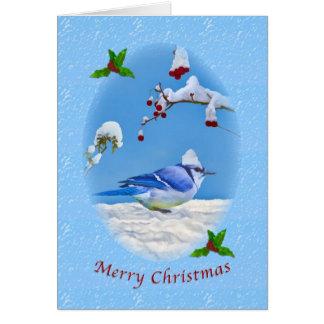 Christmas, Blue Jay Bird and Snow Card