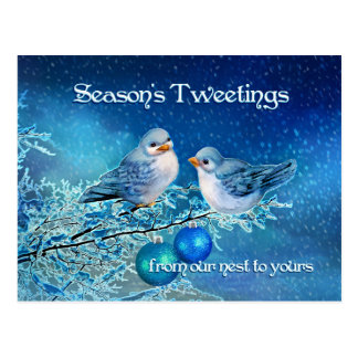 Christmas Bluebirds Tweeting in a Snowy Tree Postcard