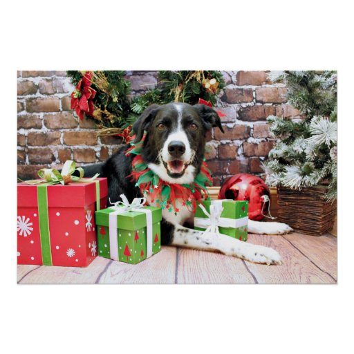 Christmas - Border Collie - Casey Posters