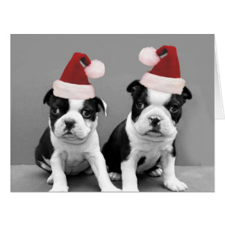 Christmas Boston Terrier puppies Big Greeting Card