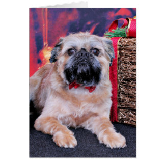 Christmas - Brussels Griffon - Oliver Card