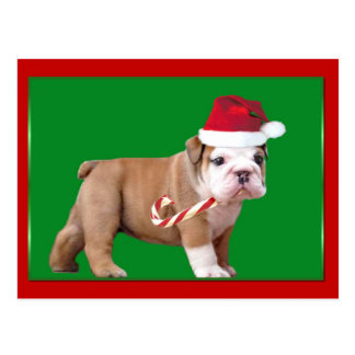 Christmas Bulldog puppy Postcard
