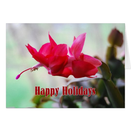 Christmas Cactus Happy Holidays Card