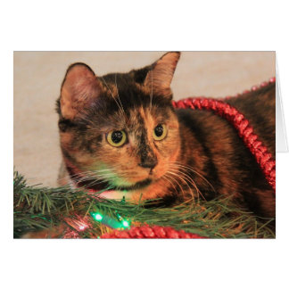 Christmas Calico, Cat likes lights! blank notes